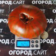 полосатый шоколад томат фото