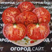 томат северная королева характеристика описание сорта