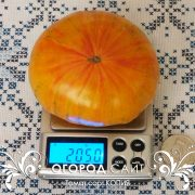 pomidor_copia_2