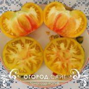pomidor_copia_3