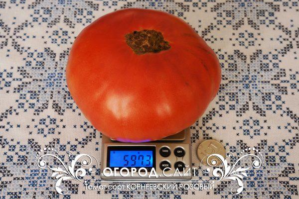 pomidor_korneevskiy_rozovy_1