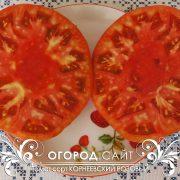 pomidor_korneevskiy_rozovy_2