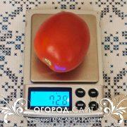 pomidor_krasavitsa_volyni_1