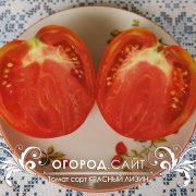 pomidor_krasny_lizin_3