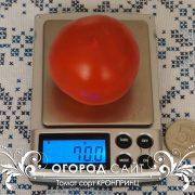pomidor_kronprints_5