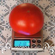 pomidor_kuvalda_2