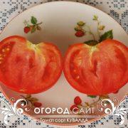 pomidor_kuvalda_3