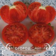 pomidor_mashenka_3