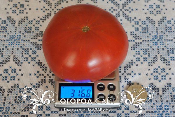 pomidor_mazarini_1