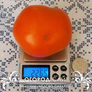 pomidor_medovo-saharny_5