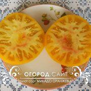 pomidor_mikado_oranzhevy_2