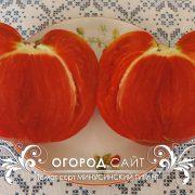 pomidor_minusinskiy_gigant_5