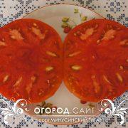 pomidor_minusinskiy_gigant_6
