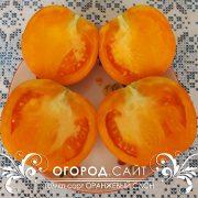 pomidor_oranzhevy_slon_3
