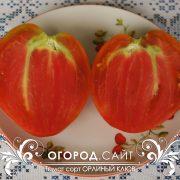pomidor_orliny_kluv_1