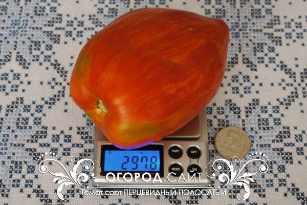 pomidor_pertsevidny_polosaty_1