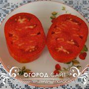 pomidor_pertsevidny_polosaty_3