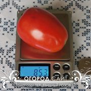 pomidor_pertsevidny_rozovy_1