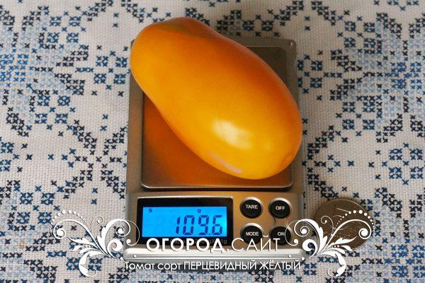 pomidor_pertsevidny_zhelty_1
