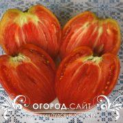 pomidor_pudovik_2