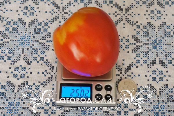 pomidor_razbitoe_serdechko_2