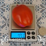 pomidor_red_alert_2