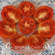 pomidor_red_alert_3