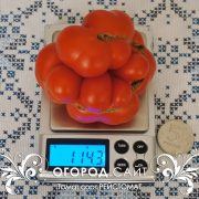 pomidor_reisotomat_2