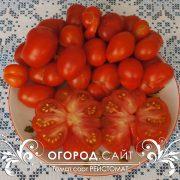 pomidor_reisotomat_4