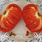 pomidor_rozovy_slon_3