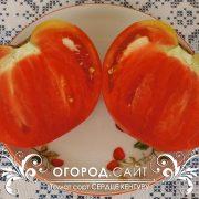 pomidor_serdtse_kenguru_6