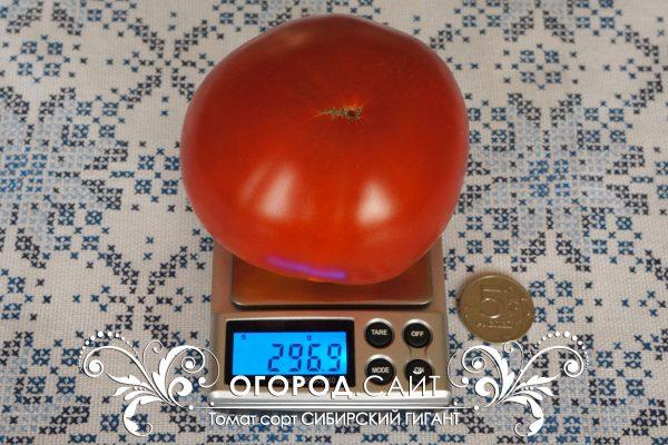 pomidor_sibirskiy_gigant_1