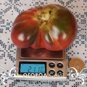 pomidor_sirenevoe_ozero_2