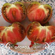 pomidor_sirenevoe_ozero_3