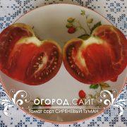pomidor_sirenevy_tuman_2