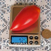 pomidor_sosulka_rozovaya_1