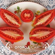pomidor_sosulka_rozovaya_2