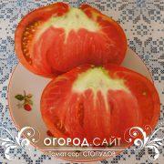 pomidor_stopudov_3