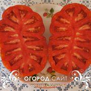 pomidor_stopudov_4