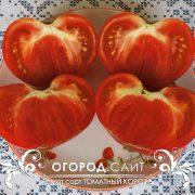 pomidor_tomatny_korol_3
