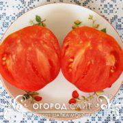 pomidor-shapka-monomaha-2