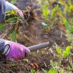 Осенняя ошибка №1: Вы прекращаете пропалывать сорняки