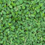 Осенняя ошибка №8: Вы не сажаете покровные растения