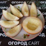 мини дыня ананас американо купить семена