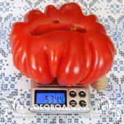 pomidor-amerikanskiy-rebristy-rozovy-2