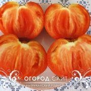 pomidor-amerikanskiy-rebristy-rozovy-7