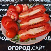 урожайный томат аурия для огорода и теплицы