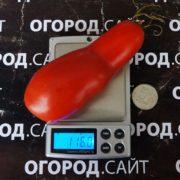 редкий сорт томата аурия