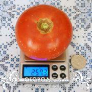 pomidor-chaynaya-roza-1