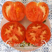 pomidor-chaynaya-roza-2